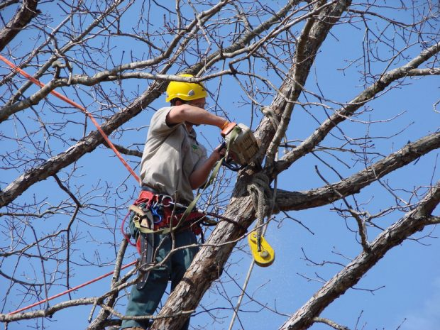 tree removal long island cost